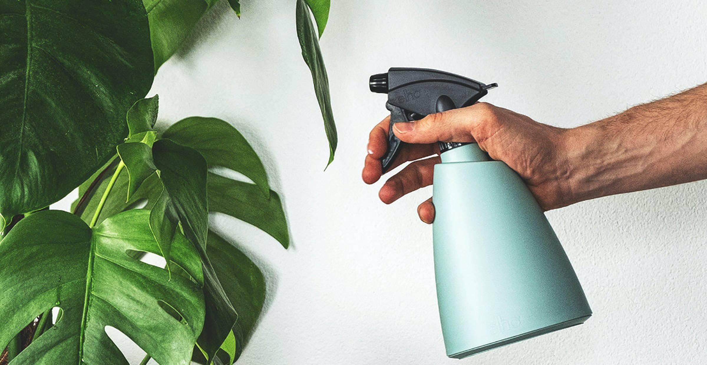 8 cách để giúp cây trong nhà luôn tươi xanh